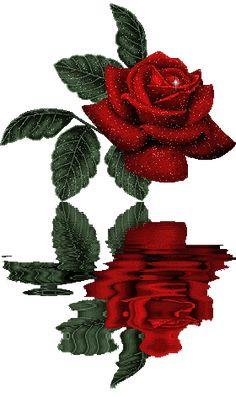 Красивая роза…