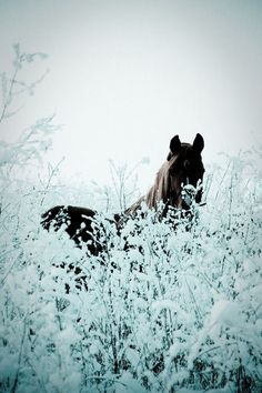 """ Horses na We Heart It. """