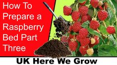 How To Prepare A Raspberry Bed Part 3