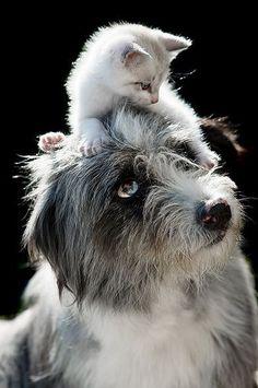 Hund mit Katze auf dem Kopf