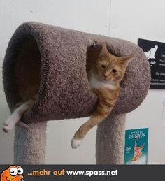 Katze chillt in Röhre