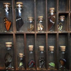 Tiny collections of butterfly wings. by thenaturalistmelb Cabinet Of Curiosities, Natural Curiosities, Nature Collection, Rock Collection, Witch Aesthetic, Displaying Collections, Wiccan, Witchcraft, Butterfly Wings