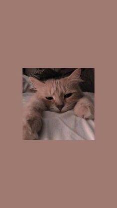Trendy Wallpaper f r Android 038 iPhone Bildschirm sperren Wallpaper Bildschir. - Trendy Wallpaper f r Android 038 iPhone Bildschirm sperren Wallpaper Bildschirm sperren am Trend - Cartoon Wallpaper, Wallpaper Fur, Wallpaper Pastel, Cute Cat Wallpaper, Iphone Wallpaper Vsco, Lock Screen Wallpaper Iphone, Cute Disney Wallpaper, Aesthetic Pastel Wallpaper, Iphone Background Wallpaper
