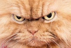 I'm Angry Cat... who the hell are you?