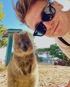 Joe Sugg, Mirrored Sunglasses, To Go, Bear, Adventure, Animals, Legends, Instagram, Animales