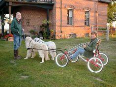 dog cart - Google Search