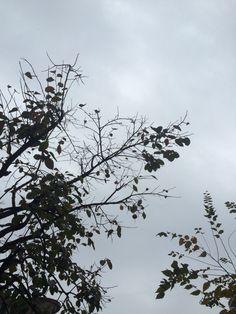 2014년 10월 31일의 하늘