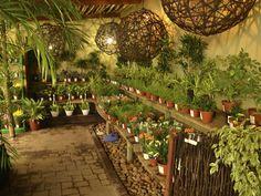 garden centre display