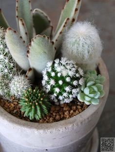 Mother Nature makes some cool shit. I love the white succulents and cacti.