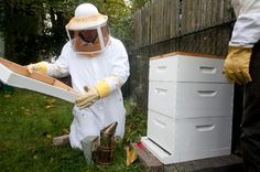 Ecologist and professional beekeeper, Wilson-Rich, adjunct professor of biology in Tufts' School of Arts and Sciences and at nearby Simmons College,  researches the mysterious ailment that has wiped out more than a third of the world's hives each winter since 2006. Bees pollinate about 130 U.S. crops, including apples, almonds, cotton and soy. About a third of all the food we eat comes from plants that depend on domesticated honeybees to pollinate them.
