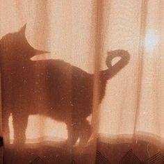 cat, kitten, and animal afbeelding