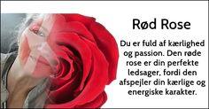 Hvilken rose repræsenterer din karakter?