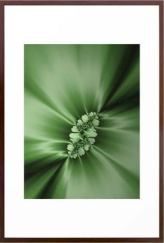 Spring Fractal Art by Northern Lights Home Staging and Design Paint Color Schemes, Paint Colors, Fractal Art, Fractals, Home Staging, Coastal Rugs, Calming Colors, Calla Lily, Colorful Interiors