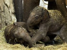 The Daily Cute: Elephant-itis...the Good Kind!