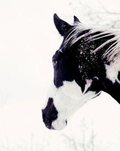 B&W Horse stunning pic