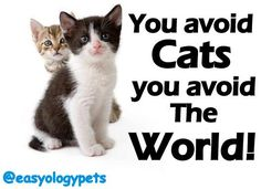 """""""You avoid Cats, you avoid The World!"""" @easyologypets"""