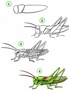 Step by Step Drawing Tutorials for Kids of All Ages - Learn to Draw Insects / How to Draw. Painting and Drawing for Kids / Luntiks. Children's Arts and Crafts Activities. Drawing and Poems Drawing Tutorials For Kids, Easy Drawings For Kids, Drawing For Kids, Animal Sketches, Animal Drawings, Art Drawings, Insect Crafts, Insect Art, Bugs Drawing