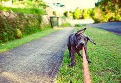 Lifestyle pet photography                                                       …