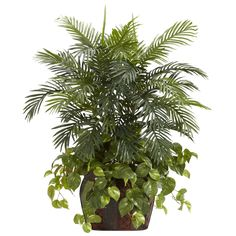 "Bring the Rainforest home with this incredible Double Areca / Pothos leaf combination. You and your guests will marvel at the lush green leaves of the Areca spreading out to greet you, while the subtle softness of the Pothos forms the perfect base. This ""little slice of paradise"" is perfectly presented in an attractive faux wooden vase that adds a touch of class. Perfect for any home or office (wherever a bold, dignified look is wanted.)"