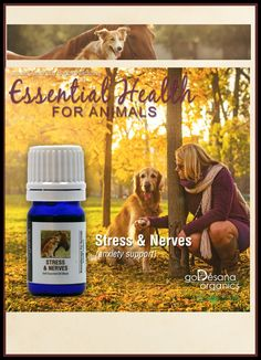 Animals can suffer from stress the same as humans, and like us, stress can take its toll on their bodies, resulting in poor physical and emotional health. Stress may also be the underlying cause of some of your pet's unacceptable behaviors such as gnawing on their feet, repeatedly licking their paws or other areas/items, or continual pacing. FREE TRAINING http://www.godesanaorganics.com/pdf/StressNervesforAnimals-datasheet.pdf