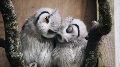 100 incredible photos of owls and other nocturnal birds of prey - Animals - Beautiful Owl, Animals Beautiful, Cute Animals, Prey Animals, Wild Animals, Animal Hugs, Nocturnal Birds, Photo Animaliere, Photo Focus