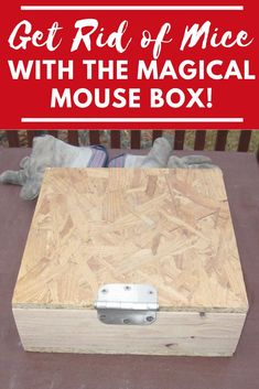 The Magical Mouse Box - Our Stoney Acres Use this simple garden hack to get rid of mice in your yard and garden. This simple to build mouse trap will bring down your mice population fast! Mouse Trap Diy, Best Mouse Trap, Amalfi, Mouse Traps That Work, Homemade Mouse Traps, Electric Mouse Trap, Bucket Mouse Trap, Mouse Trap Board Game, Home