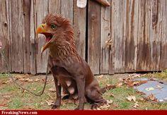 Slightly scary eagle dog thing