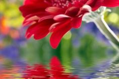 Reflection of flowers