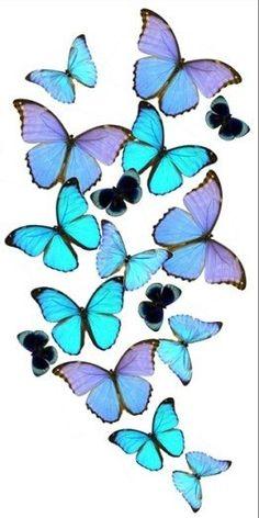 """""""...borboletas sempre voltam e o seu jardim sou eu."""""""