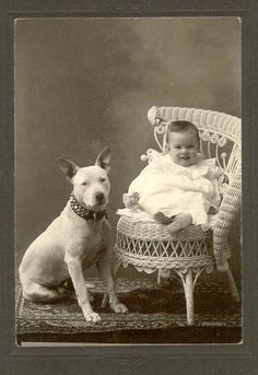 Pit Bull Dogs This early Bull Terrier and little friend were photographed in the late to early - Pitbull Terrier, Pitbulls, Nanny Dog, Vintage Dog, Vintage Children, Vintage Images, English Bull Terriers, Dog Photos, Animals Beautiful