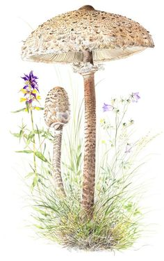 Vielä ehdit metsään: Näin löydät sienet Fungi, Dandelion, Flowers, Plants, Mushroom, Mushrooms, Dandelions, Plant, Taraxacum Officinale