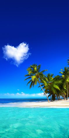 Ideas Wall Paper Nature Iphone Palm Trees For 2019 Beautiful Nature Wallpaper, Beautiful Landscapes, Beautiful Wall, Trees Beautiful, Beautiful Mind, Animals Beautiful, Beach Pictures, Nature Pictures, Ocean Wallpaper