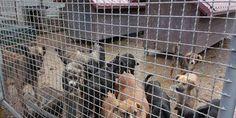 Bosnien/ Bosnie: Stop brutalnom hvatanju i ubijanju pasa lutalica u Srbiji / Stoppen Sie die brutalen Einfangungen und Tötungen der streunenden Hunde in Serbien / Stop the brutal capture and killing of stray dogs in Serbia https://www.change.org/p/stop-brutalnom-hvatanju-i-ubijanju-pasa-lutalica-u-srbiji