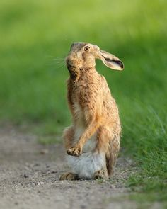 Hare in the Suffolk | Mike Rae