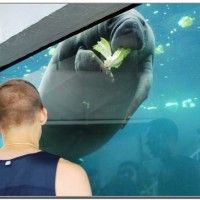 Mote aquarium sarasota attractions