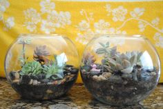 """To piggyback on big sis' post about not being able to """"sit still""""…this is what we did on a HOT Monday morning. MAKE TERRARIUMS! How To Make Terrariums, Succulent Terrarium, Terrarium Ideas, Leafy Plants, Indoor Plants, Suculentas Diy, Terraria, Cactus Flower, My New Room"""