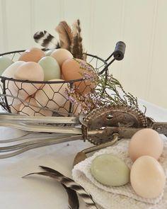 I går hentet jeg og bestevenninnen min 10 nye høner til gården 😍 De har virkelig blitt en flott gjeng, som legger flotte egg. Egg kommer til salgs i gårdsbutikken ❤️🐓