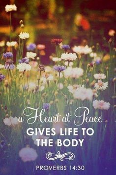 Proverbs 14:30 ... Part of daily devo ... Cultivating peace <3 sweet reminder in today's harsh world!