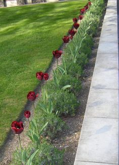 Узкий цветник-бордюр вдоль дорожки