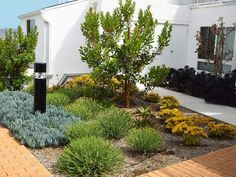the plants are water wise and work well in the coastal areas landscape design by waterwise botanicals in escondido ca