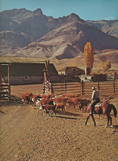 Men who take care of large herds of cattle are called cowboys or cowhands. Ranch Farm, Ranch Life, The Ranch, Cattle Ranch, Texas Ranch, Cowgirl And Horse, Cowboy Up, Cow Girl, Westerns