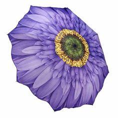 Galleria Wisteria Daisy Folding Umbrella | ACHICA