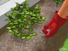 Imagem intitulada Grow a Hedge Fence Step 10