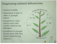 Big Picture Agriculture: Plant Nutrient Deficiency Leaf Illustrations and Charts Reference Guide Leaf Illustration, Planting Roses, Tree Care, Organic Fertilizer, Aquatic Plants, Mo S, Garden Care, Medicinal Plants, Plant Care