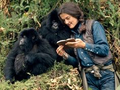 Leakey helped to facilitate Jane Goodall's long-term field study of chimpanzees in the wild,Dian Fossey's work with mountain gorillas in Rwanda, and Birute Galdikas-Brindamour's work with orangutans in the Sarawak region of Indonesia. Jane Goodall, Primates, Dian Fossey, King Kong, National Geographic, Gorillas In The Mist, Baby Gorillas, Orangutans, Mountain Gorilla