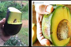 5 reasons to eat Avocados Everyday...  david-wolfe-avocados