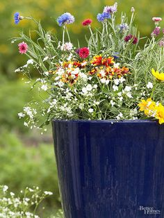 Containers for Pollinators  Want to support the bees, hummingbirds, and butterflies but don't have space for a full garden? Try these containers filled with pollinator-friendly plants.