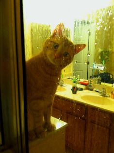 What Ya Doing?  Youre not even safe from the cats stares in the shower. He must see you at all times.