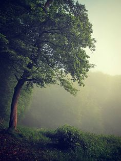 Trees in the Mist by Bernd :  Taken on May 16, 2012 Rimbach, Hesse, DE