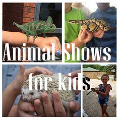 Animal-Shows-for-kids